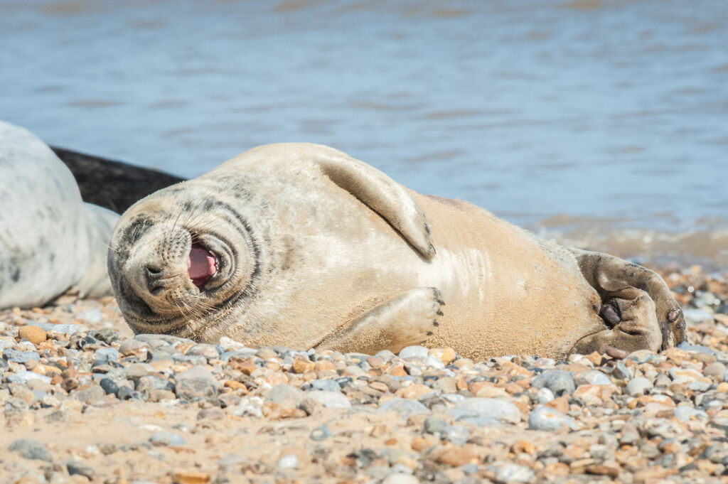 Laughing Seal | Funny Travel